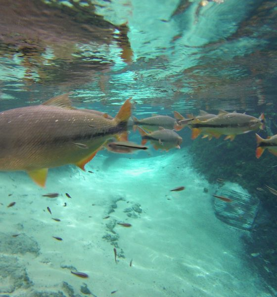 Você já foi a um aquário natural ? Vem conhecer o aquário Encantado em Nobres – Mato Grosso